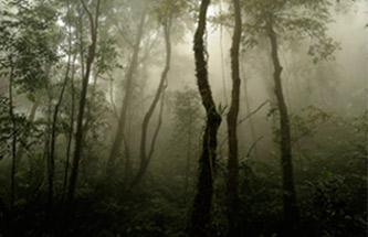 northtailand_jungle